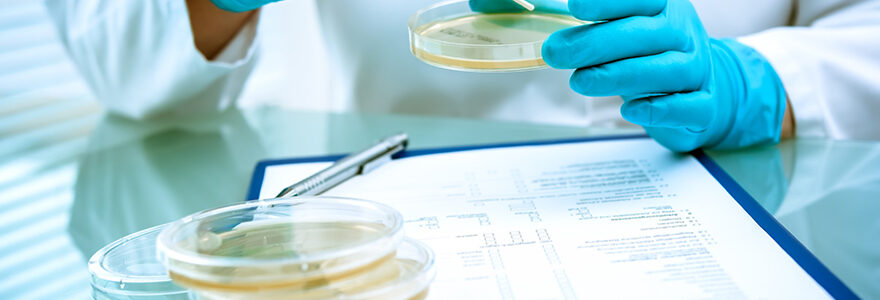 Securite alimentaire et bacteriologie